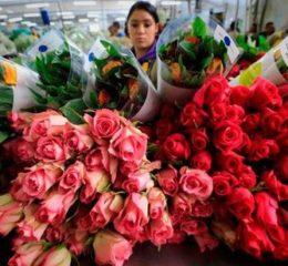 Цветочный бизнес: перспективы, возможные направления