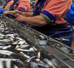 Открываем завод по производству рыбных консервов