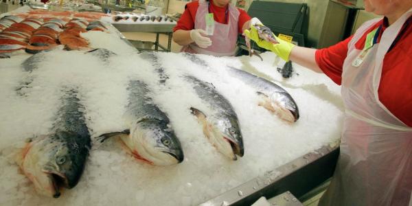 Как хранить рыбу для продажи