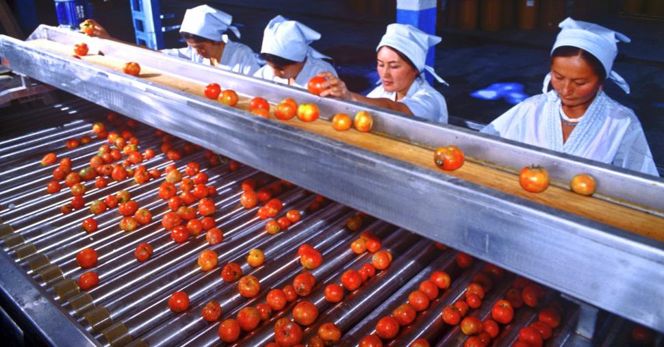 Линия по сортировке томатов