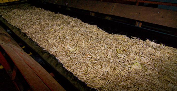 Внешний вид нарезанной свеклы для изготовления сахара.