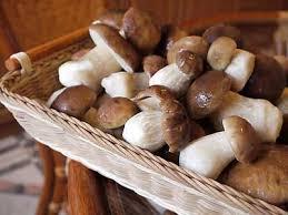Внешний вид грибов выращенных для бизнеса.