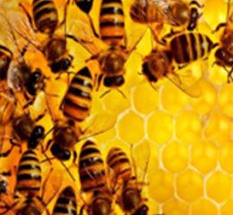 Бизнес-план пчеловодства (открытия пасеки)