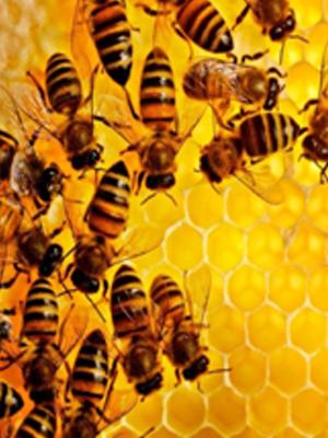 Пчеловодство как выгодный бизнес с нуля.