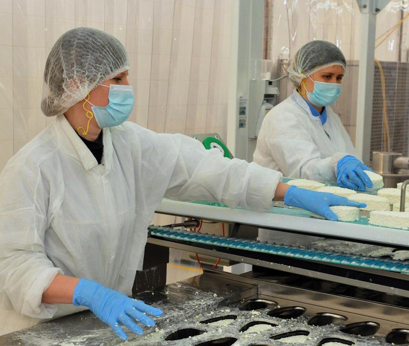 Процесс изготовления творога на производстве.