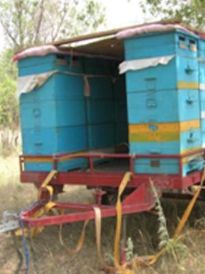 Несколько домиков для разведения пчел как бизнес.