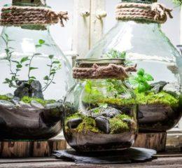 Изготовление флорариумов — свой бизнес без вложений