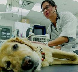 Сколько зарабатывает ветеринар?