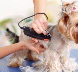 Как открыть салон груминга собак и кошек?