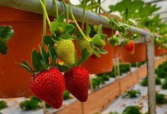 Бизнес план на выращивание клубники с расчетами