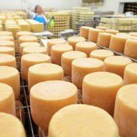 Прибыльное дело по производству сыра