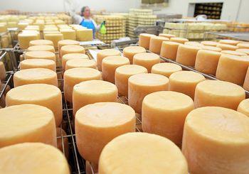 сырное производство