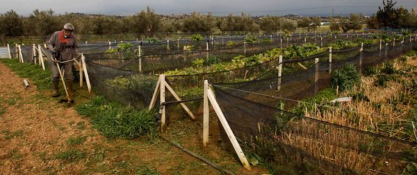 Бизнес план ферма улитки бизнес план лофт проекта