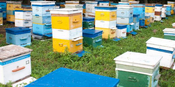 Продажа уликов для пчеловодов