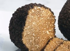 Бизнес по выращиванию трюфелей в домашних условиях