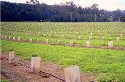 технология выращивания трюфелей