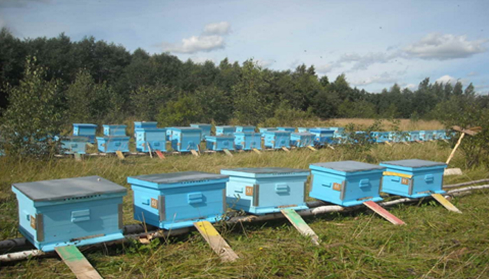 Несколько пчелиных домиков для разведения пчел как бизнес.