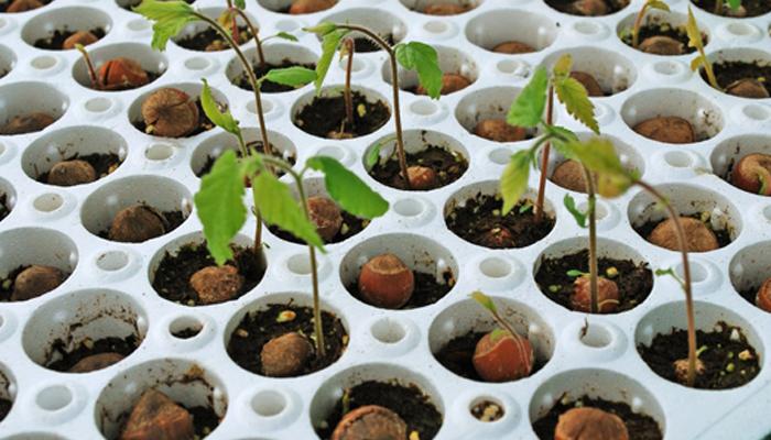 Внешний вид маленького растения для бизнеса.