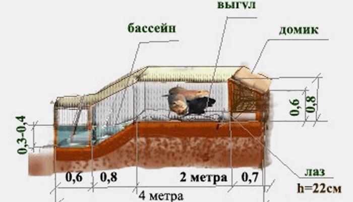 Детальная схема клетки для нутрий с сохранением условий содержания.
