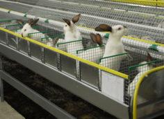 Кроличья мини ферма как бизнес.