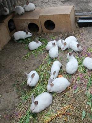 Кролики на оборудованной территории для разведения.