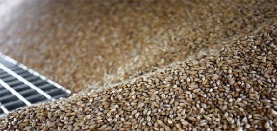 Процесс изготовления солода на производстве пива.