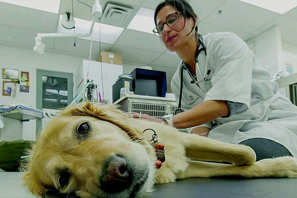Лечение животных ветеринаром.