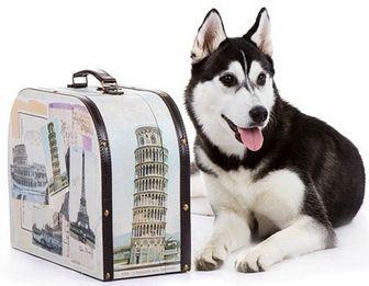 Бизнес план гостиница для животных