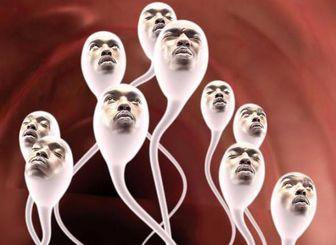донорство спермы