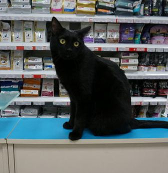 открытие ветеринарной аптеки