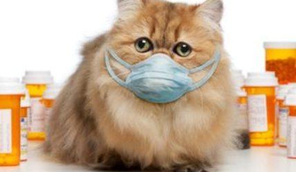 Как открыть ветеринарную аптеку?