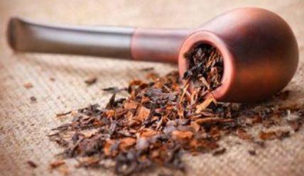 Выращивание табака в домашних условиях как бизнес