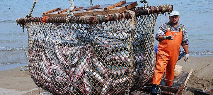 работа в Исландию на рыбном промысле