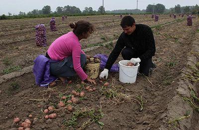 работа в Белоруссии на селе